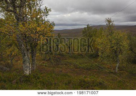 It will be autumn in the Grövelsjön area in Sweden.