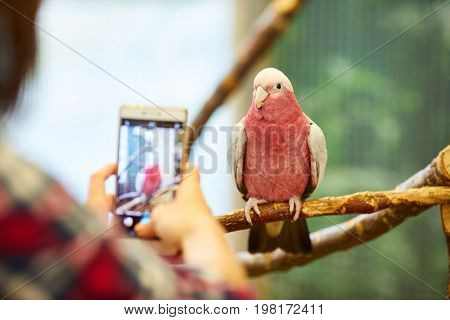 Taking a Picture of a Parrot
