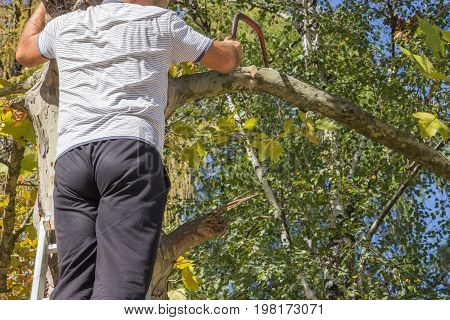 Pruning Dead Tree Branches