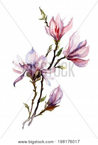 Pink magnolia flowers on a twig. Isolated on white background. Watercolor painting. Hand drawn. Vertical orientation.