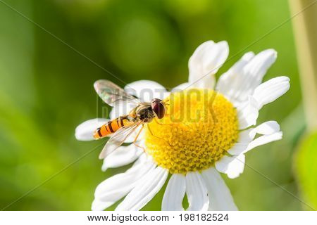 Small Wasp Just Landed On Small Flower