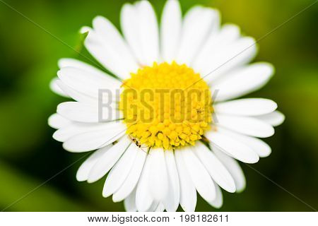 Small Beautiful Flower On Green Background