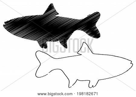 silver carp silhouette vector , (Hypophthalmichthys molitrix)