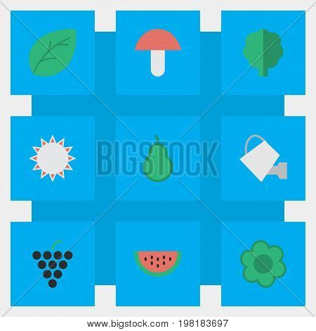 Elements Bailer, Sunny, Wine And Other Synonyms Sun, Paper And Can.  Vector Illustration Set Of Simple Gardening Icons.