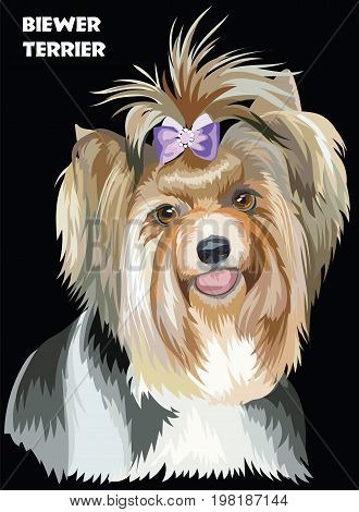 Vector Portrait of Biewer terrier (Yorkshire Terrier) in diferent color Illustration on black background