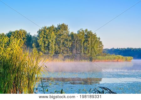 Summer morning landscape. Islet with green trees on the lake.