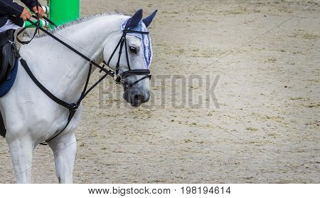 White dressage horse and rider. White horse portrait during dressage competition. Advanced dressage test. Equestrian sport background. Copy space for your text.