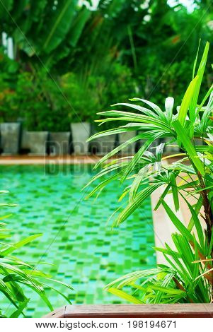 Beautiful Swimming Pool Green Plants Tropical Resort Vacation Travel Phuket Thailand Background Copy Space