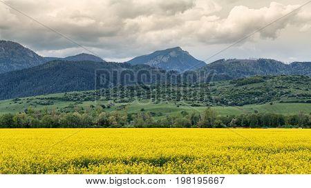 Hill Choc and yellow rapeseed field Slovakia