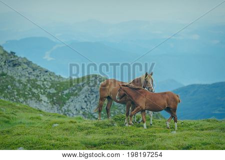 Horses in the green foothills of the Drakensberg mountains, South Africa