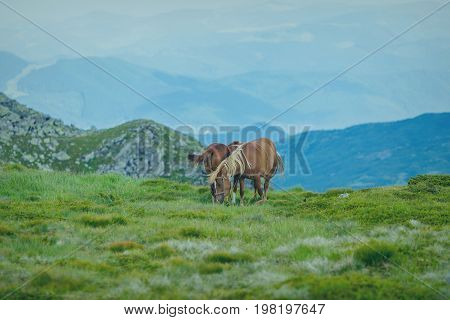 Horses in a meadow. Family with little foal
