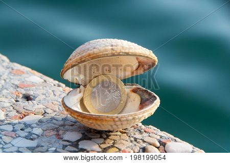Sea clams fasolara or warty venus. Isolated photo of shell with a coin in it