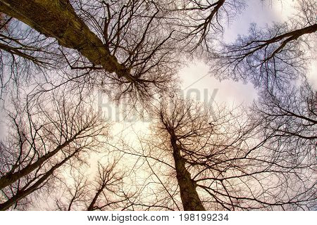 Trees without leaves in park with fisheye lens