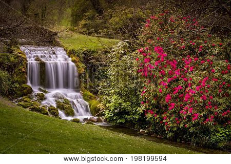 Waterfall and Rhododendrons at a popular Dorset beauty spot