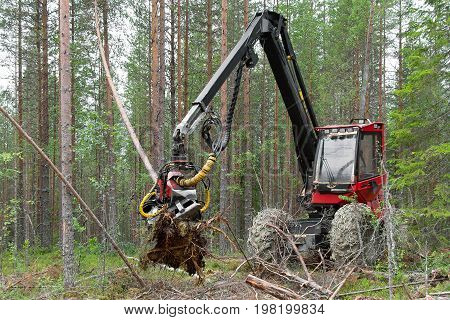 Harvester machine working in a forest, felling young trees. Northern Karelia, Russia