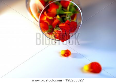 Glass Vase Filled With Red Rose Petals. Aromatherapy Concept.