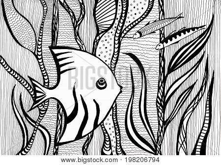Angelfish Between Algae Under Water In Sea