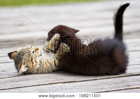 Two little cute kittens playing and biting each other outdoors