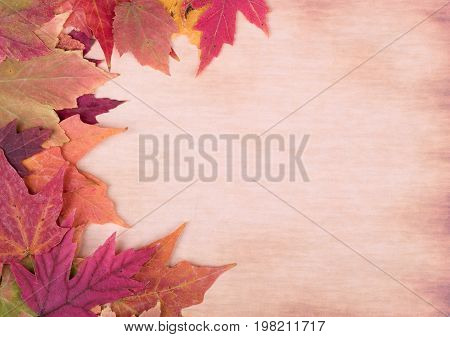 Colorful autumn maple leaves on a vintage surface