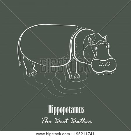 White Hippopotamus Silhouette Hand Drawing Digitally on the Green Gray Background with the Heading Below. Line Art Vector