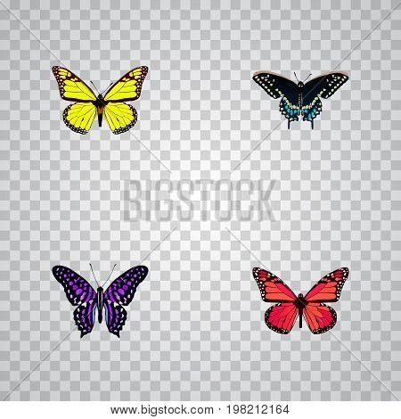 Realistic Archippus, Morpho Hecuba, Polyommatus Icarus And Other Vector Elements