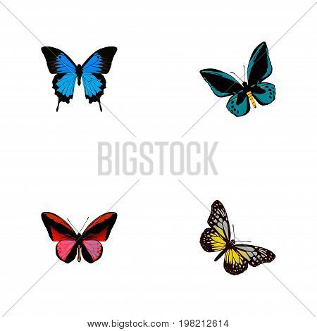 Realistic Common Blue, Demophoon, Summer Insect And Other Vector Elements