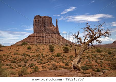 Dead tree in front of a butte in Monument Valley in Arizona, United States