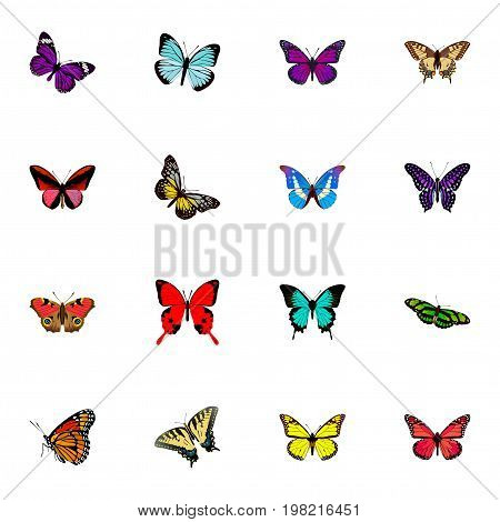 Realistic Checkerspot, Callicore Cynosura, Tiger Swallowtail And Other Vector Elements
