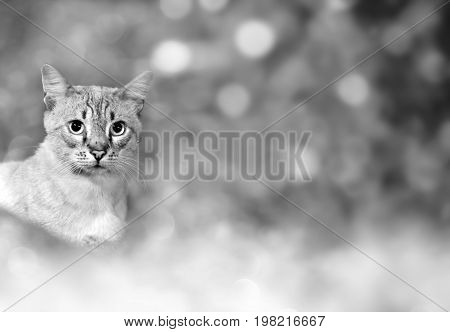 Black and white cat theme background with bokeh lights and copy space.