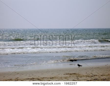 Bird On The Shore And Waves On The Sea