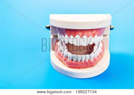 Plastic dental teeth model of a full set of human teeth