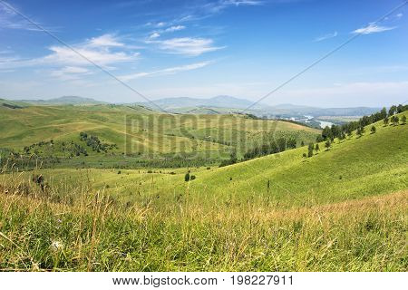 Beautiful Summer Landscape: Green Hills Covered by Trees and Blue Sky with White Clouds (Altay)