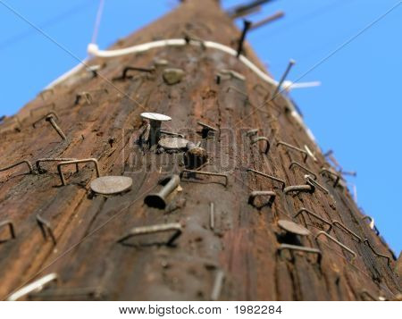 Close Up Shot Of Staple Wire, Nails On Electric Post