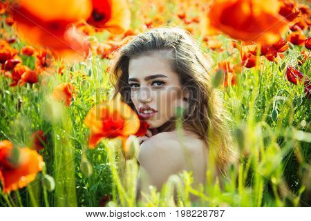 love intoxication. poppy seed and girl with long curly hair in red flower field with green stem on natural background summer spring drug and opium
