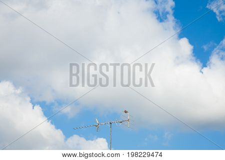 blue sky with cloud concept of hope new start Fresh Dove hold the antenna