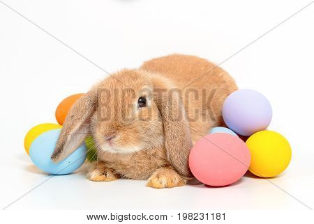 Cute little easter bunny on white background