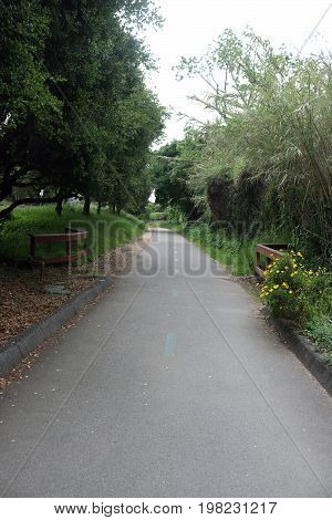 Looking down a long narrow walking/running/bike path with bushes and trees on both sides