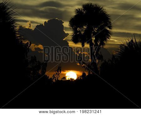 Sunset with Clouds and Palm Tree at Merritt Island National Wildlife Refuge in Titusville FL