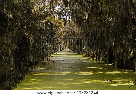 Canal with Swamp and Spanish Moss forming a tunnel in Fl
