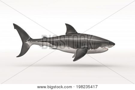 White shark on white background. This is a 3d render illustration