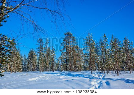 Winter fairy tale in a sunny frosty day. Lapland. In deep snow there are blue shadows. The concept of active and extreme tourism