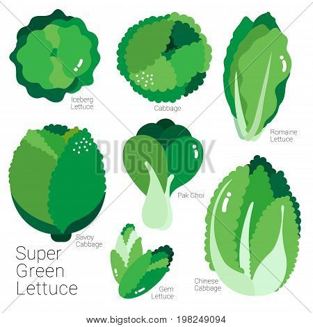 Many kinds of lettuce are illustrated in green color.