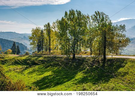 Range Of Poplar Trees By The Road On Hillside