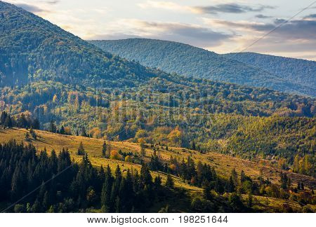 Meadow Among The Forest On Hillside At Autumn Morning