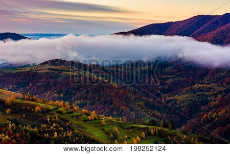 Cloud On The Hill With Colorful Foliage At Dawn