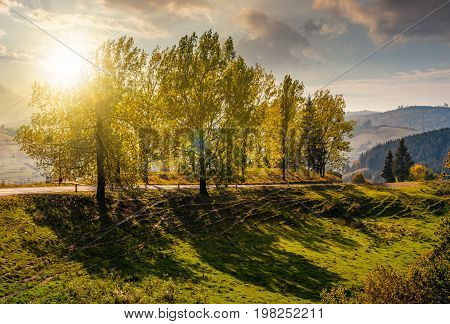 range of poplar trees by the road on hillside. beautiful day in mountainous countryside at sunset