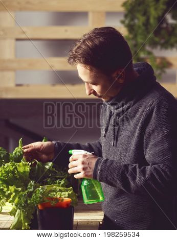 Handsome young grower carefully irrigating plants indoor. Cuisine, nutrition, vegetarian and growing concept.