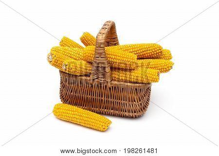 Mature corn cobs lie in a wicker basket. White background - horizontal photo.