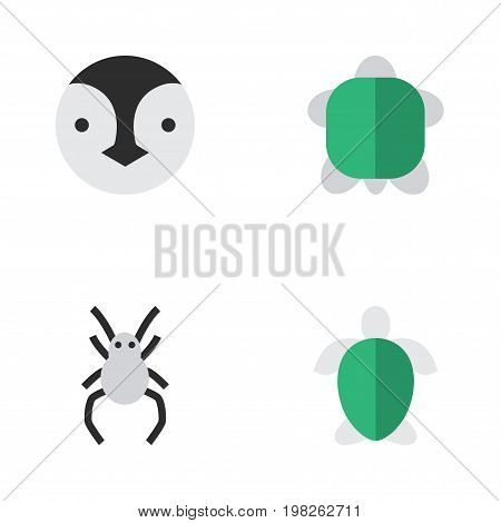 Elements Tortoise, Turtle, Flightless Bird And Other Synonyms Bird, Turtle And Spider.  Vector Illustration Set Of Simple Zoo Icons.