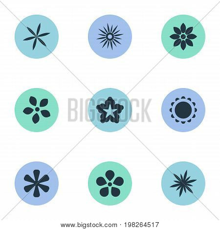Elements Floret, Larkspur, Delphinium And Other Synonyms Ornament, Delphinium And Stephanotis.  Vector Illustration Set Of Simple Blossom Icons.